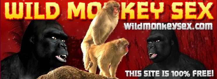 Wild Monkey Sex